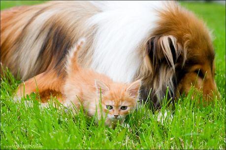 when_kitten_meets_dog_12