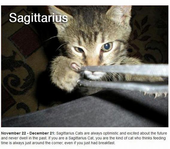 cats_zodiac_09