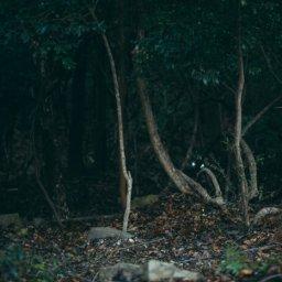 【闇画像】青木ヶ原樹海の看板たち怖すぎワロタwww