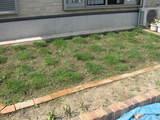 芝生それから