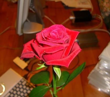 RED ROSE MUSIC