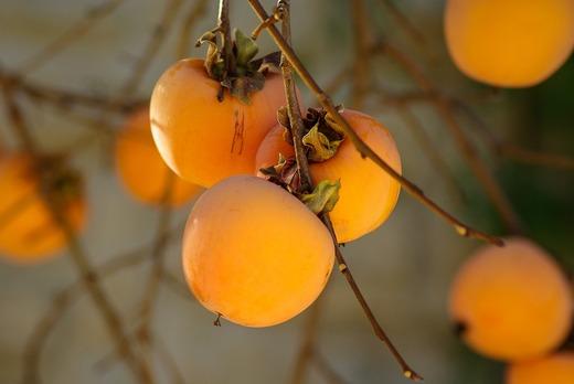 fruit-1065727_1280