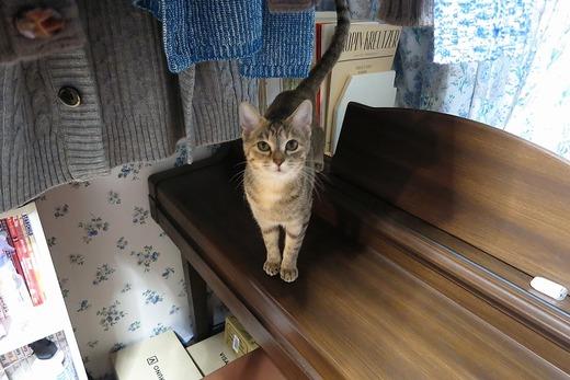 ピアノの上の仔猫