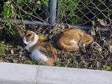 ミケと親ネコ