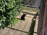 黒ネコの子供