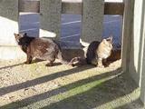 日向ぼっこネコたち。