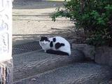 公園にいたネコ。