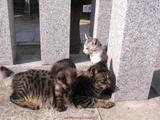 大人のネコと子供のネコ。
