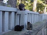 神社のネコたち。