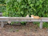 定点観察ネコ