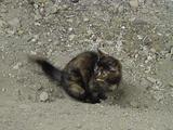 黒い子ネコ