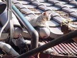 屋根の上で戯れる子ネコ2匹。