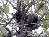 木登りさん。