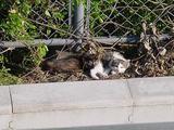 定点観察地の子ネコ2匹