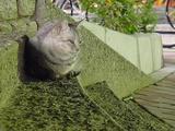 公園のネコ。