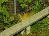 夜の子ネコ