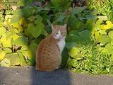 定点観察地の子ネコ。