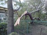 台風の威力。