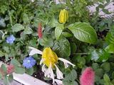 いろんな花がある。