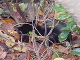 黒ネコおやすみ。