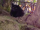黒いネコ、今日は生きてます。