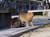 公園のネコたち。