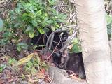 黒ネコの親子。