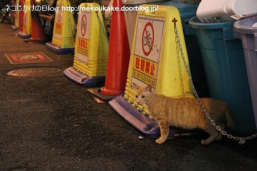 優秀な駐輪監視員。