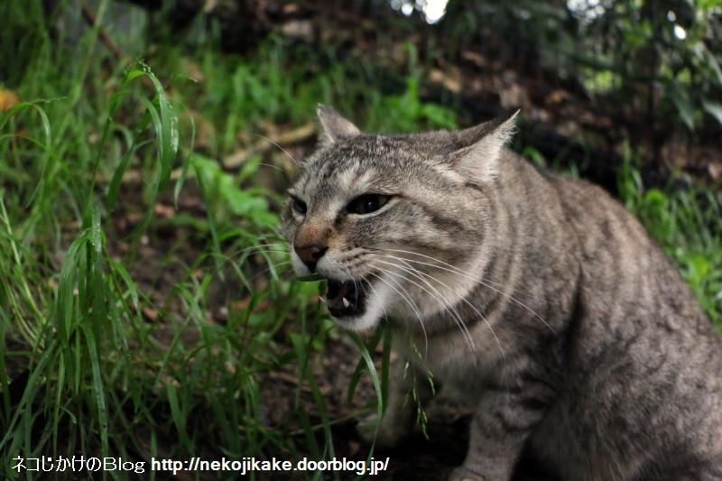 2015041006雨中猫あり。5