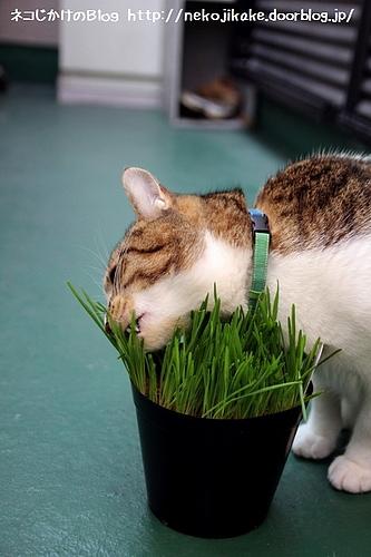 久々の草食。