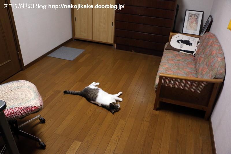 2018062804部屋に猫が落ちている。