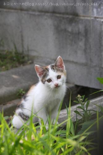 守るべきものがある。その2 ミケ子ネコ