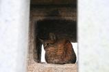 灯篭に子ネコ。
