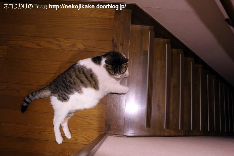 2017070401階段を落ちる夢を見ない。