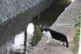 若き白黒ネコの悩み。その3