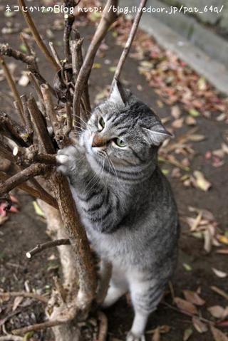 枯れ木に花を・・・。 みこ
