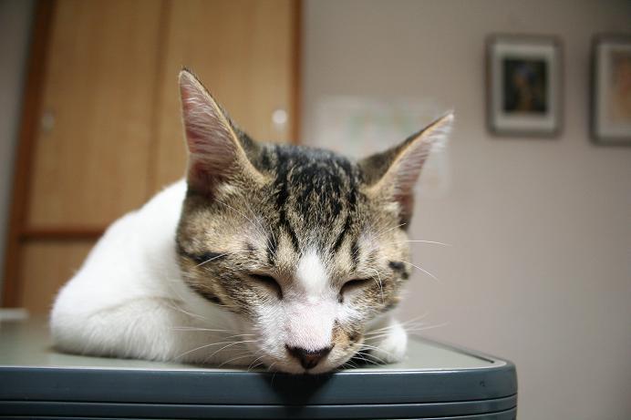 ネコは電子計算機の夢を見るか?シマ