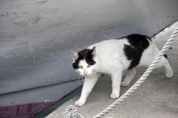 日本唯一。その4 白黒ネコ
