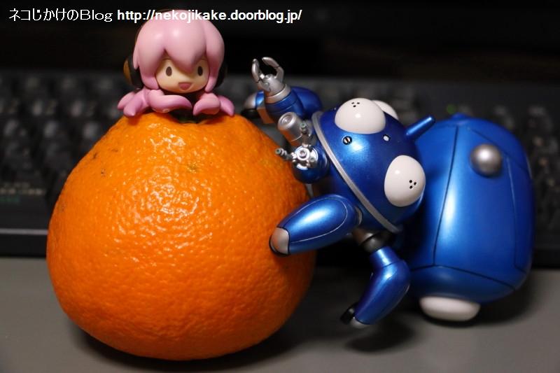 2019021503オレンジヤマノボレ。