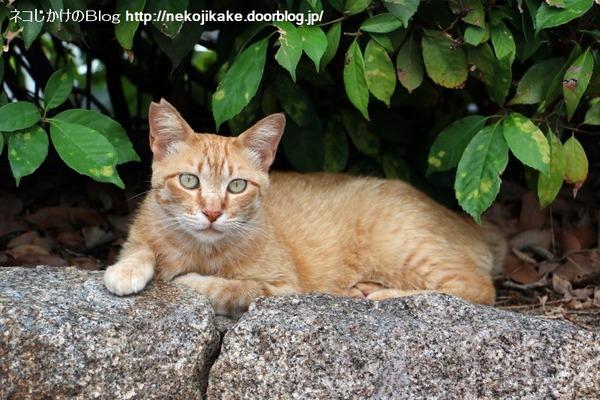 2016061403猫の見つめる先。1