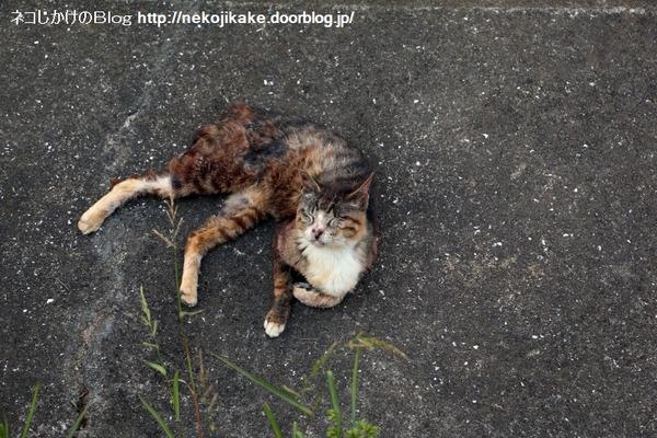 2016071804夕涼みの猫たち。1