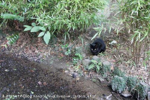 ぼくらはみんな生きている。その4 黒ネコ