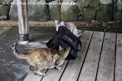 人のかばんの周りで遊ばないように。