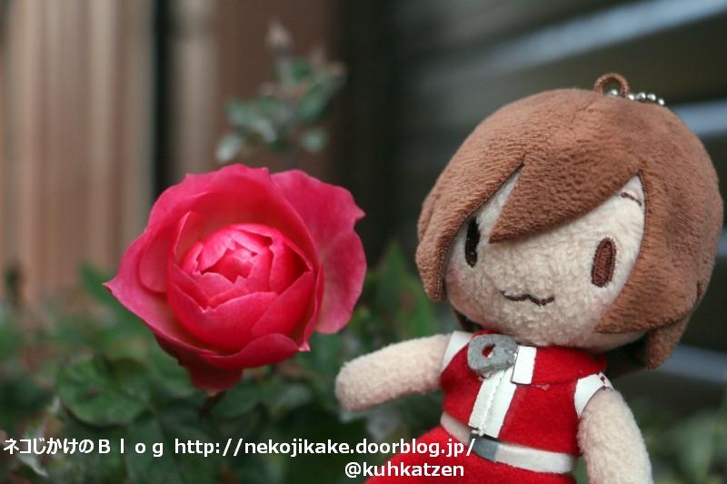 2020012003バラが咲いた。