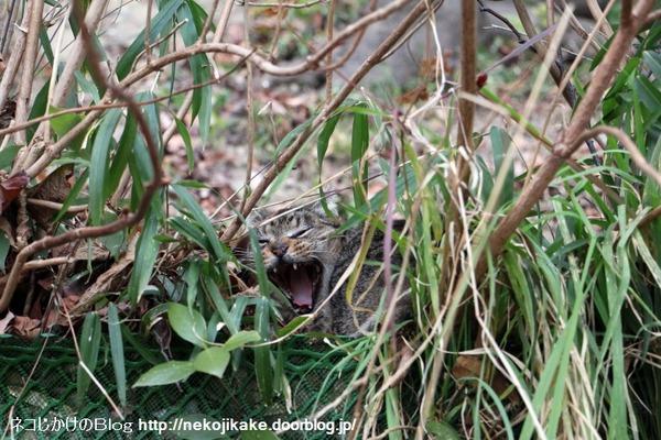 2016012603モモちゃんのあくび。1