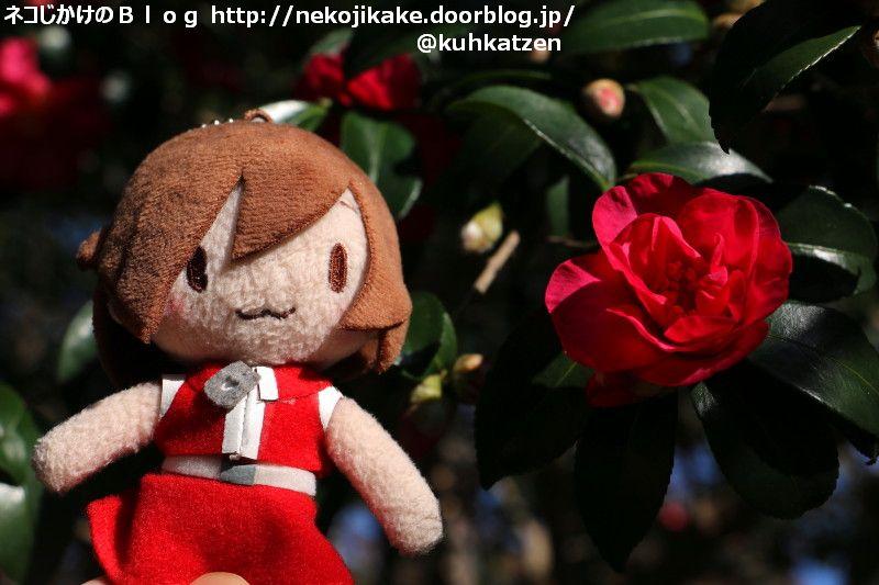 2019120112真っ赤な花がよく似合う人。