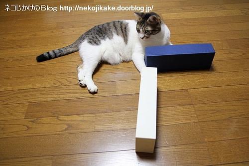 CATの「T」