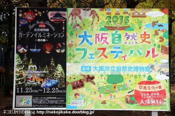 2016112013大阪自然史フェスティバル2016に行ってきました。1