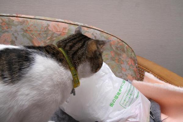 レジ袋。シマ1