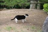池のそばのネコたち。その6